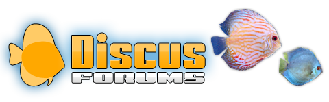 Discus Forums - Powered by vBulletin